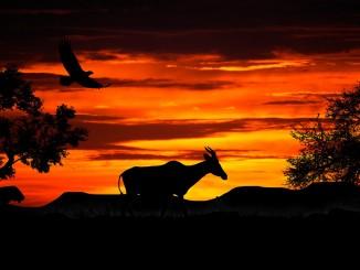 gazelle-nature-1264039_1920