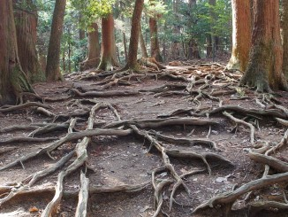 roots_japan-956073_1280