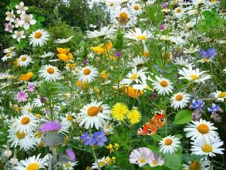 wild-flowers-67119_1920